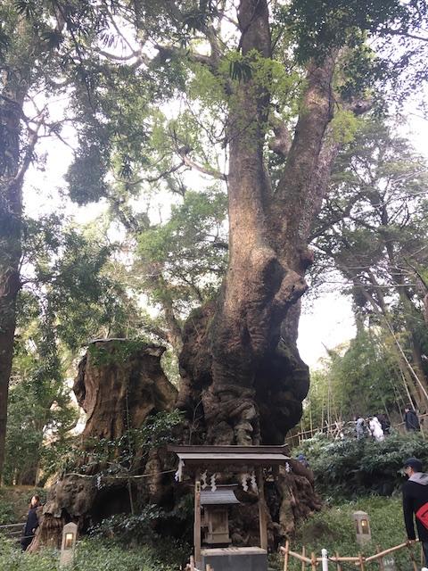 来宮神社の御神木
