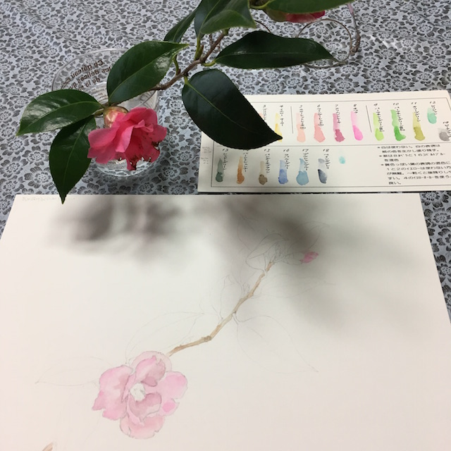 水彩画教室のヤブツバキ