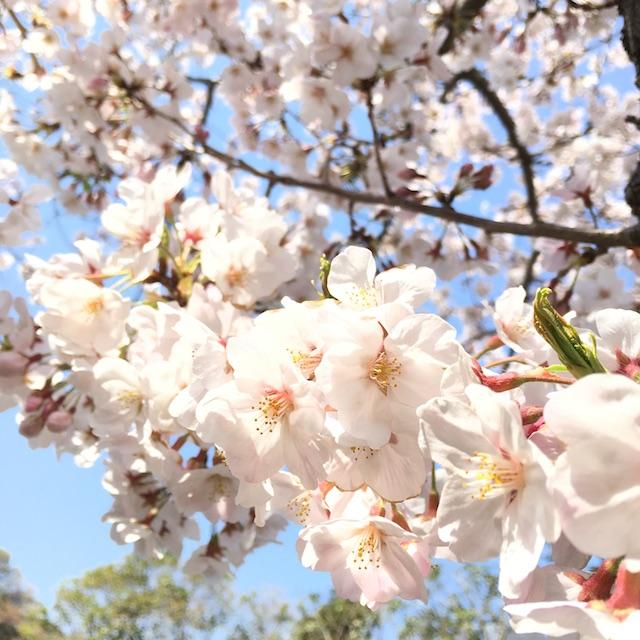 2019-04-07-01お花見
