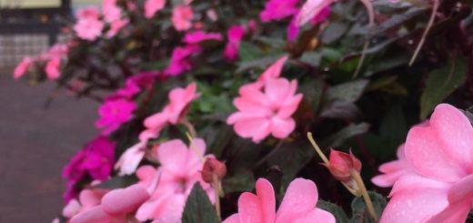 テニスコートの花