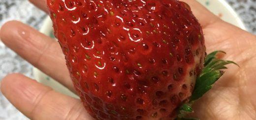 イチゴでっかい!