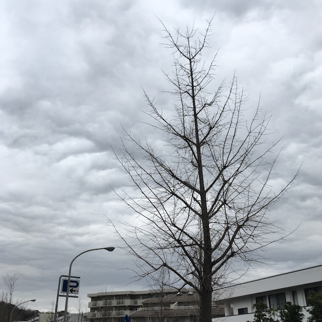曇り空でも気持ちはいいもの