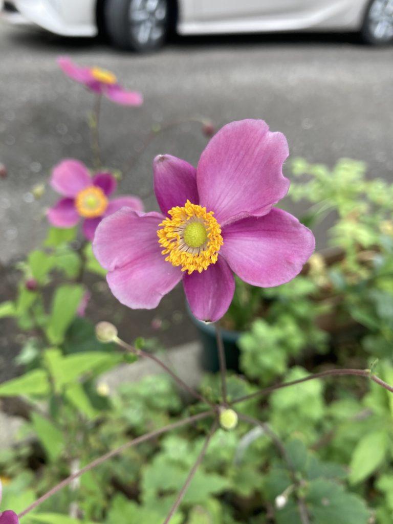 不思議な花びら