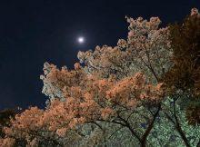見上げる夜桜